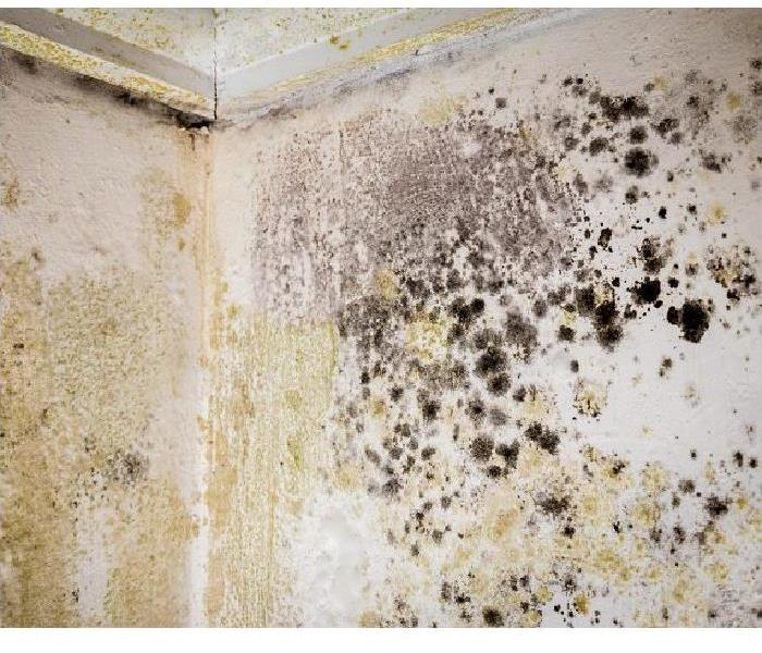 Mold on wall and ceiling